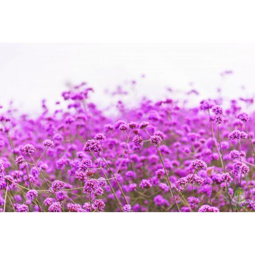 Bio verbéna virágvíz