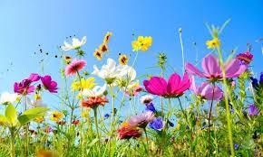 Tavaszi szellő illatolaj