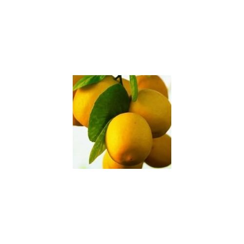 Citruskert illóolaj válogatás