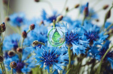 Bio búza virágvíz