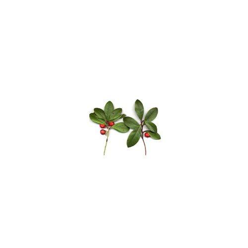 Wintergreen olaj (Bio)