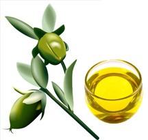 Illóolaj és jótékony hatásai, 2. rész- Jojoba olaj