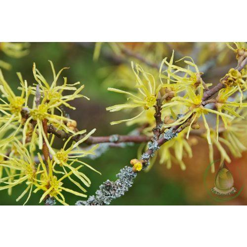Bio hamamelisz virágvíz (varázsmogyoró)