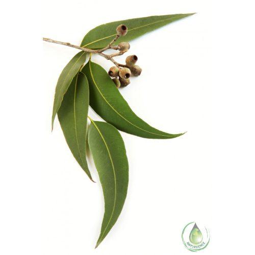 Eukaliptusz  radiata illóolaj