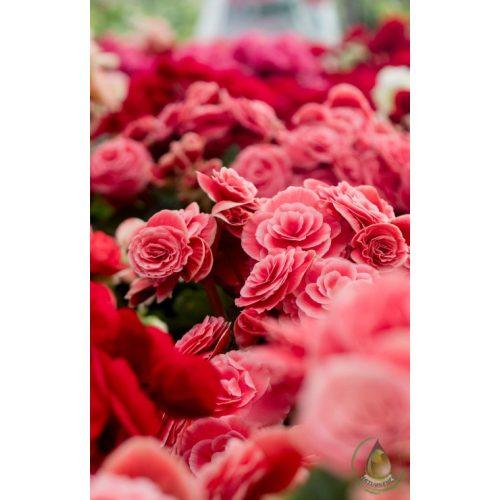 Rózsakert illatolaj