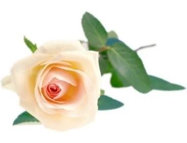 Angol rózsa illatolaj